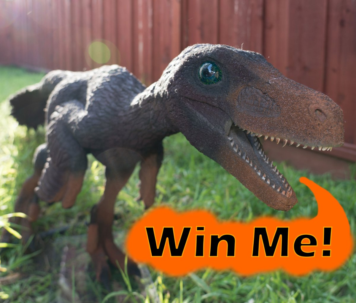 How to Enter Our Velociraptor Sculpture Sweepstakes